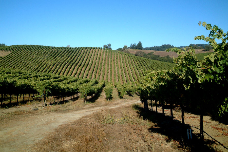 Amista Dry Creek Vineyard View