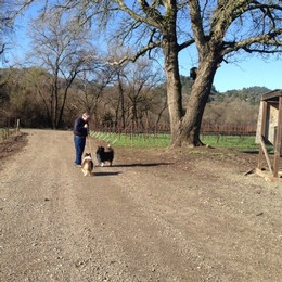 Amista Vineyards Old Frost Pump and Dogs