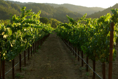 Amista Estate Vineyard Tours